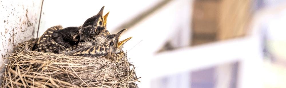 empty nest syndrome midlife crisis