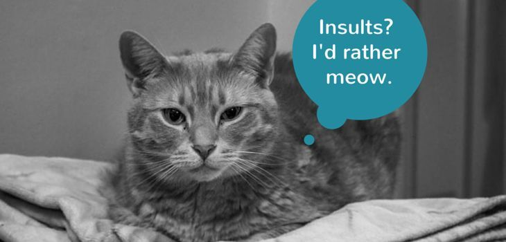 insults id rather meow